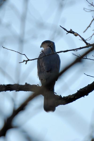 Hawk 1WD_2409