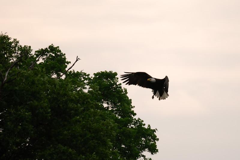 Eagle 2WD_6551