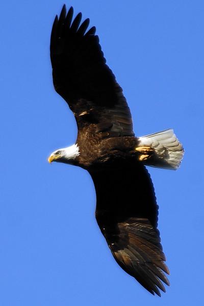 eagle WLD_2091