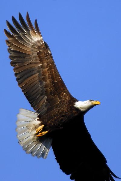 Eagle WLD_2112