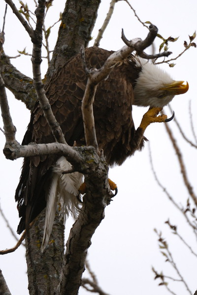 Eagle 1WD_7980