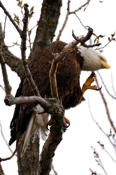 Eagle 1WD_7984