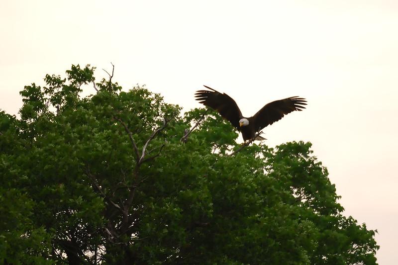 Eagle 2WD_6554