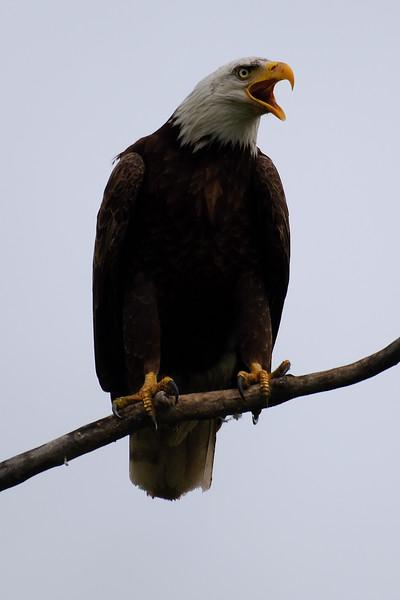 eagle 2WD_6545