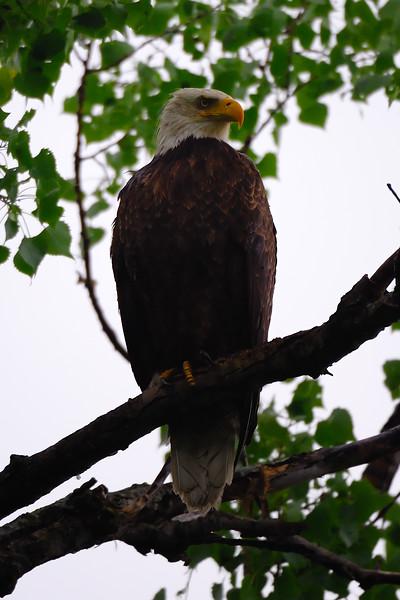 Eagle 2WD_6586