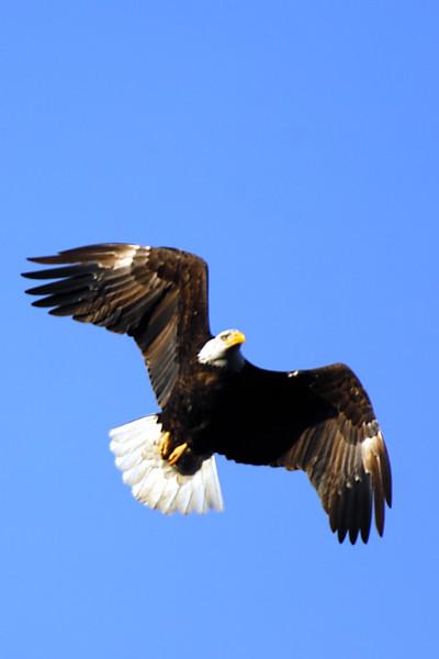 eagle WLD_2109