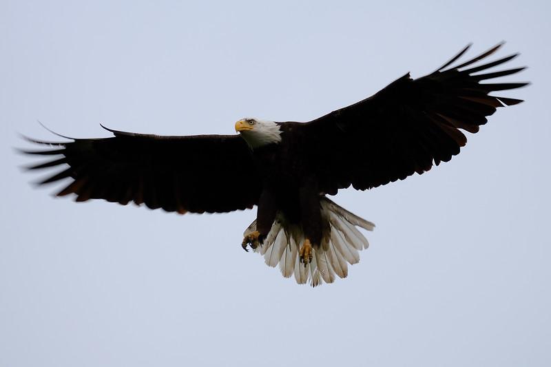 Eagle 2WD_6537