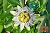 Flowers - 17