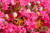 Flowers - 07