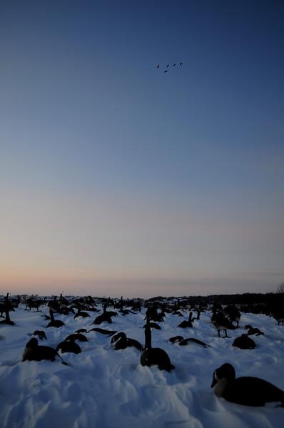 Goose Hunting Late Season BKJ_5171
