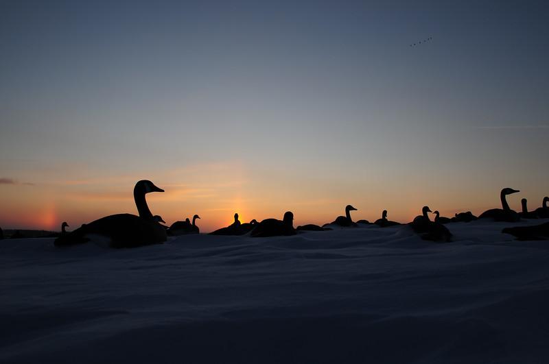 goose hunting sunset BKJ_5141