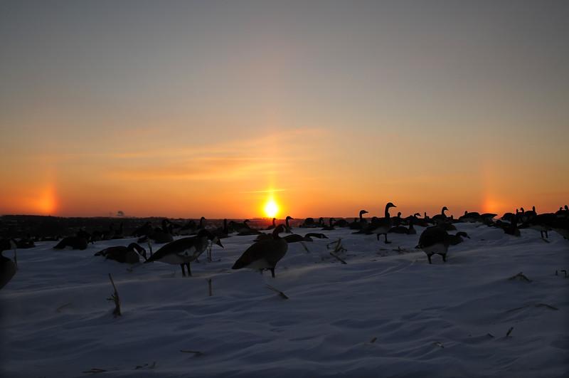 Goose Hunting Late Season BKJ_5111