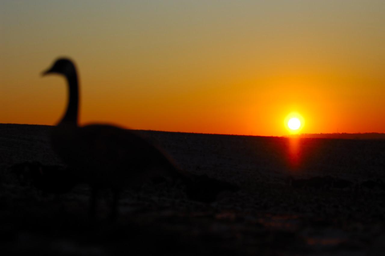 N5D_1043e Goose Hunting Sunrise