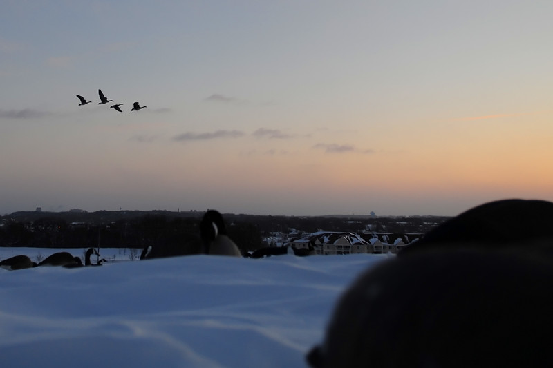 Goose Hunting Late Season BKJ_5147
