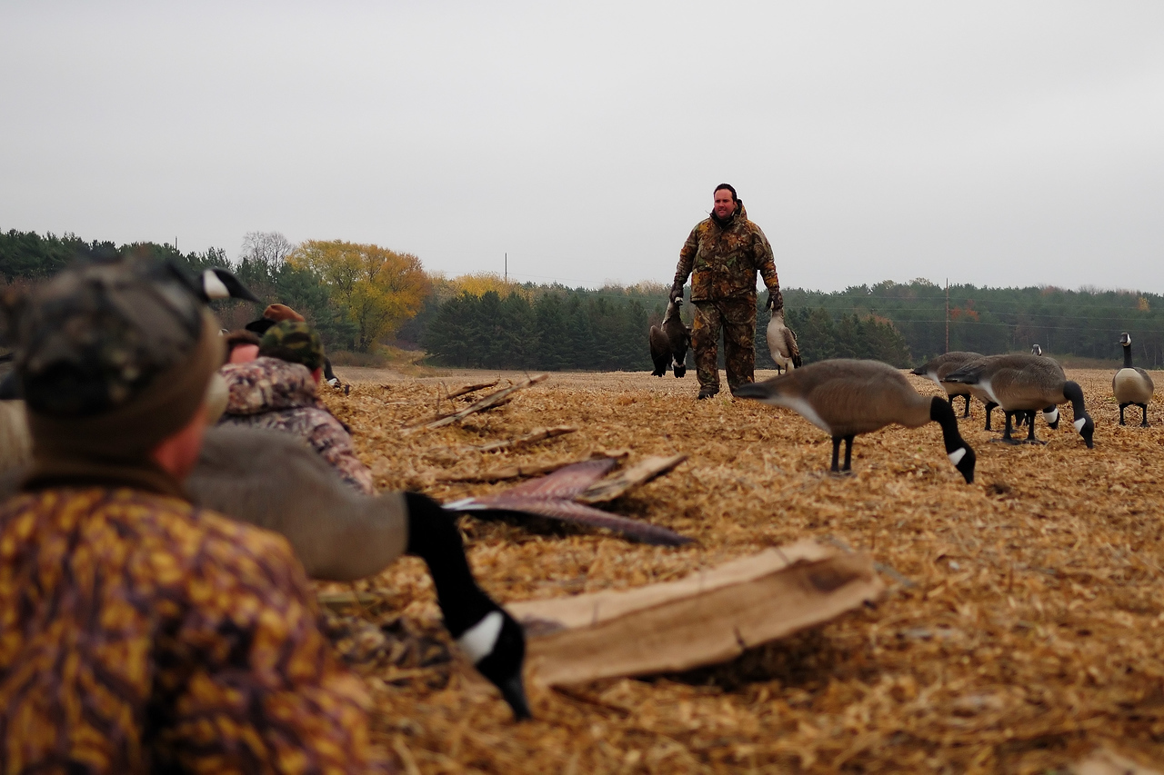 Goose hunting Double GOS_8776