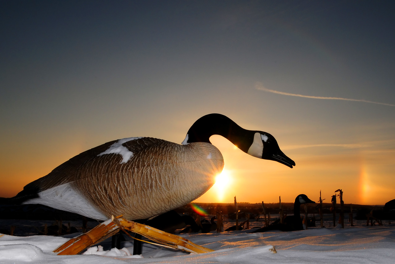 Goose hunting late season BKJ_5051