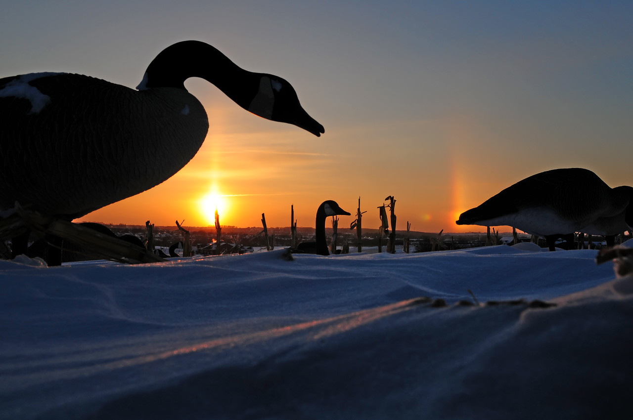 Goose Hunting Late Season BKJ_5094