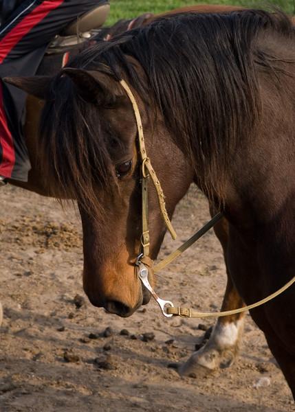 Horse-head-MWL_3639