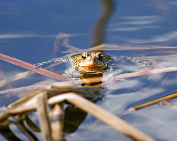 Frog-MW2_5245