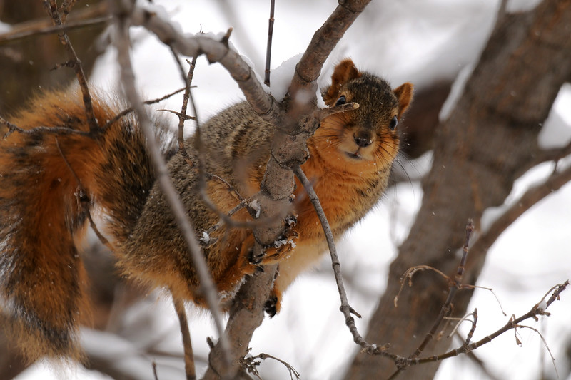 Squirrel SGC_3854