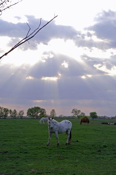 Horse-MWL_3662