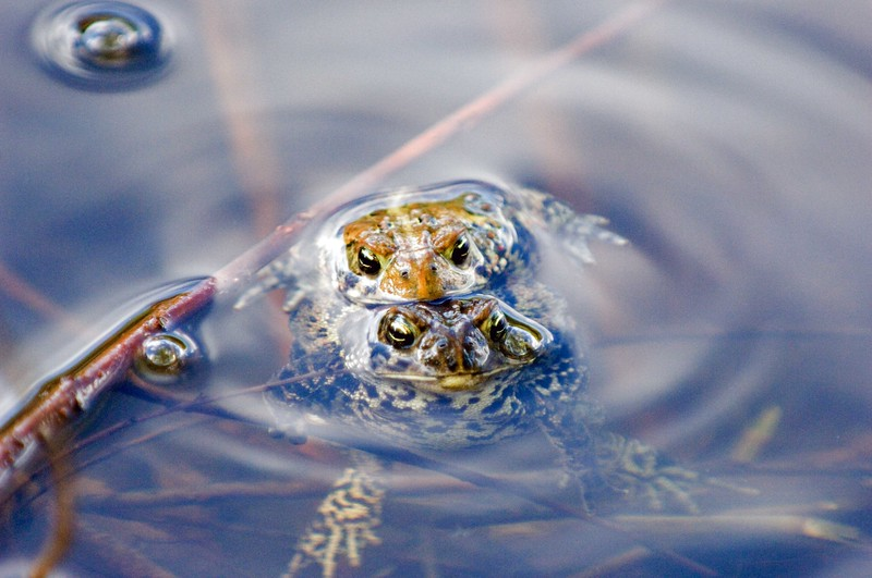 Frogs-MW2_5246