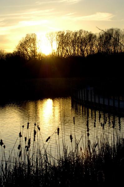 sunset-cattails-WID_1199