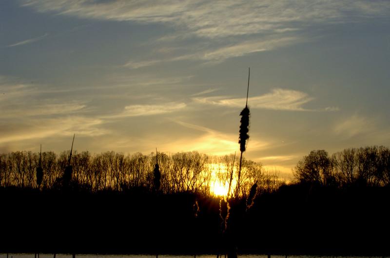 sunset-cattails-WID_1209