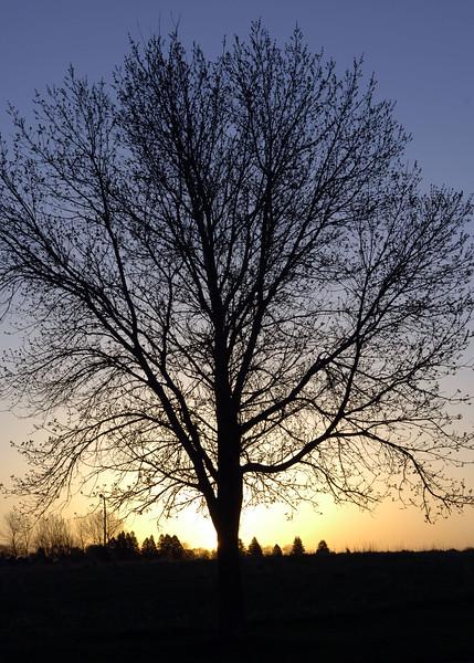 sunrise-WID_1386