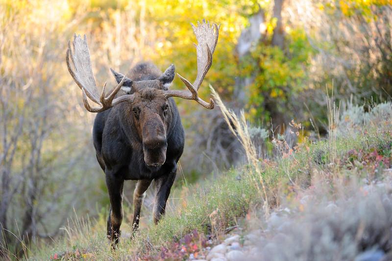 Bull Moose BG2_8974