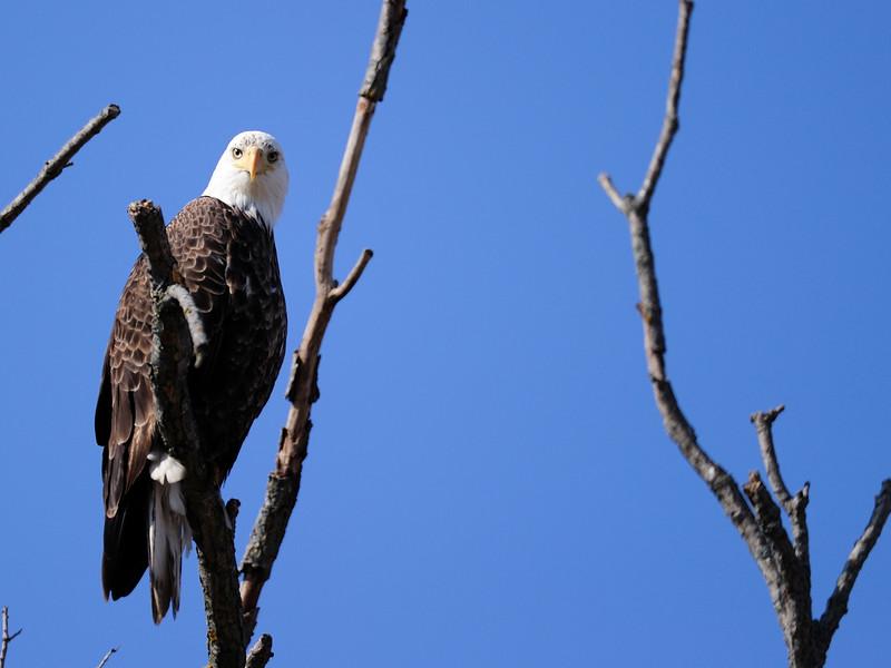 1 eagle LST_6057