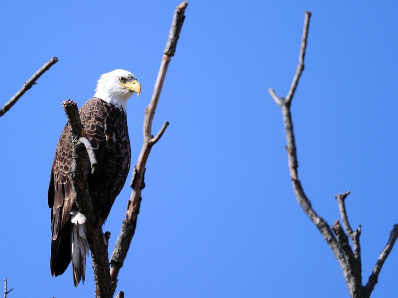1 Eagle LST_6054