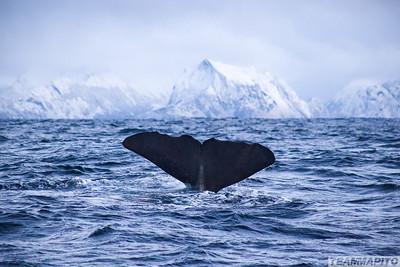 Orca Sea Safaris    Book a Whale & Dolphin Sea Safari