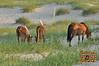 Cattle Egret - 3
