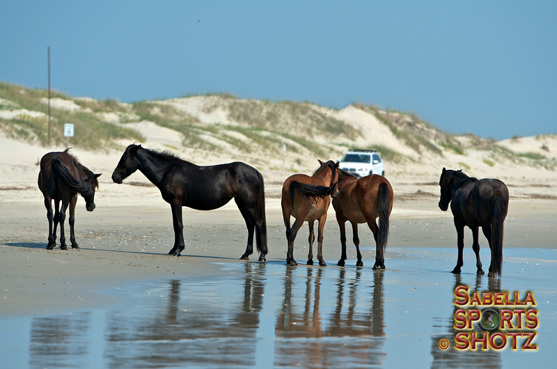 Horse came down to the beach one morning