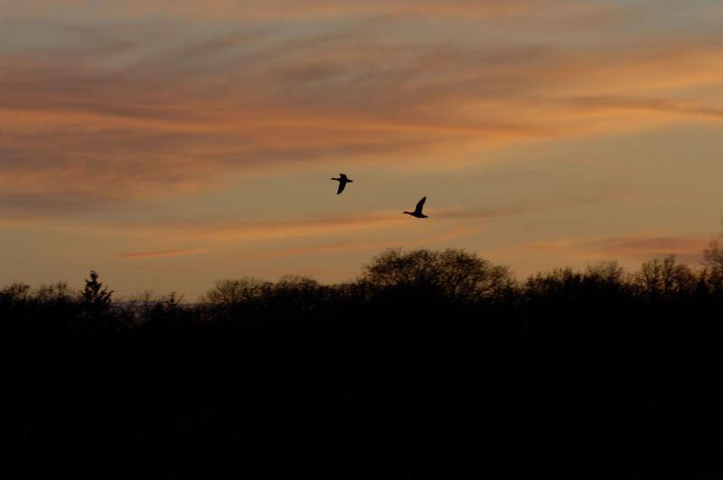 sunset-WID_1262