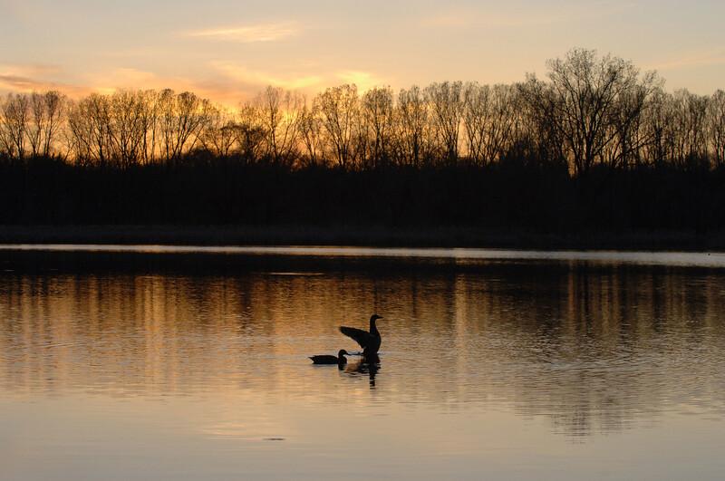 Sunset-mallard-stretch-WID_