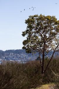 Cowichan Estuary - Cowichan Valley, Vancouver Island, British Columbia, Canada