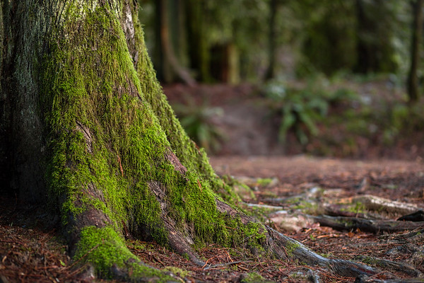Bright Angel Park - Duncan, Cowichan Valley, Vancouver Island, British Columbia, Canada