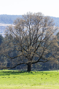Gnarly Tree - Cowichan Valley, Vancouver Island, British Columbia, Canada