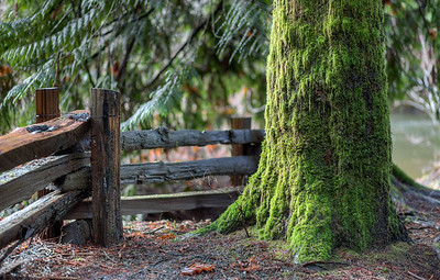 Bright Angel Park - Duncan, Cowichan Valley, Vancouver Island, British Columbia, Canada