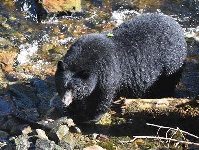 bb on the creek