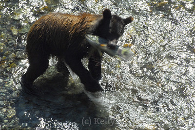 bear catches the fish 2