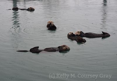 lots of sleeping otters 1