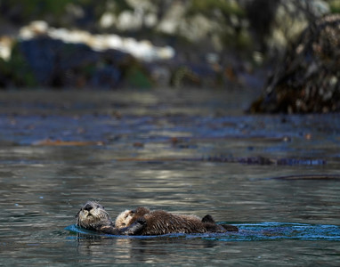 II mother otter and pup 1