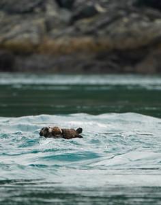 sea otter mom pup inians 2