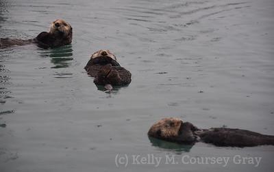 3 sleeping otters 2