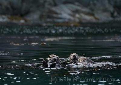 Ininan Sea Otters 2