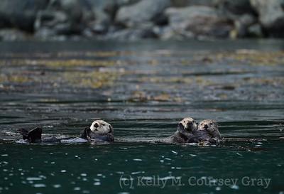 Ininan Sea Otters 1