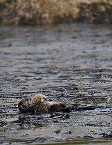 otter mom pup 2